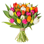 Tulpen von handmanstand