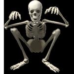 Klapperndes Skelett
